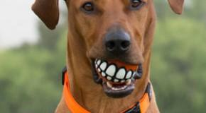 Top 10 des idées cadeaux insolites pour son chien